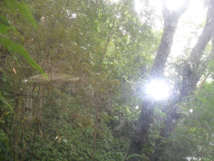 Jornal Vida Brasil Texas bosque Business - Casa triplex no Humaitá  á venda, está a cinco minutos a pé, da Lagoa Rodrigo de Freitas na zona sul do Rio De Janeiro Destaques News