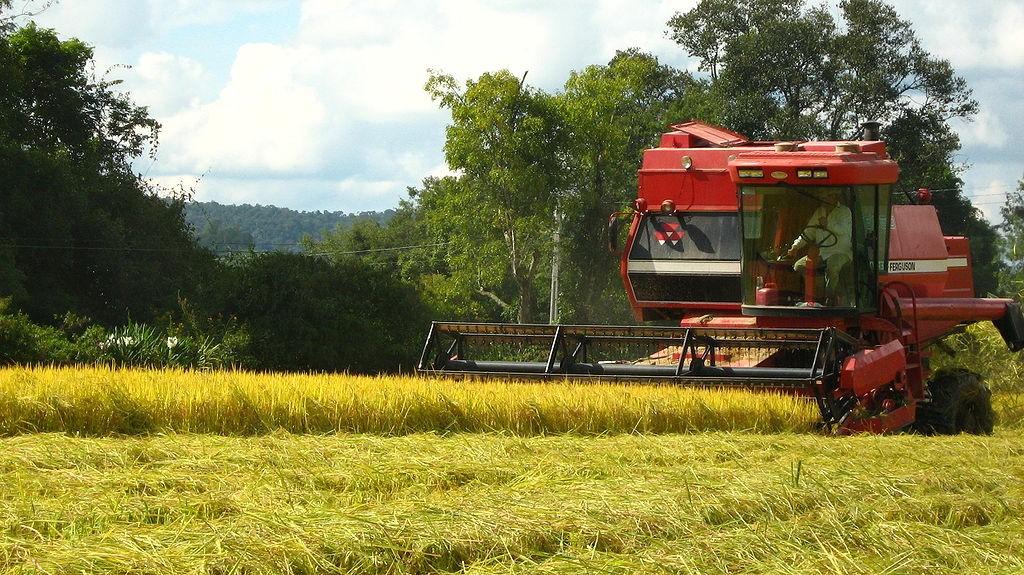 Jornal Vida Brasil Texas agro-negocio CRÔNICA - O GRANDE QUEBRA-CABEÇA CHAMADO BRASIL. Crônicas Destaques